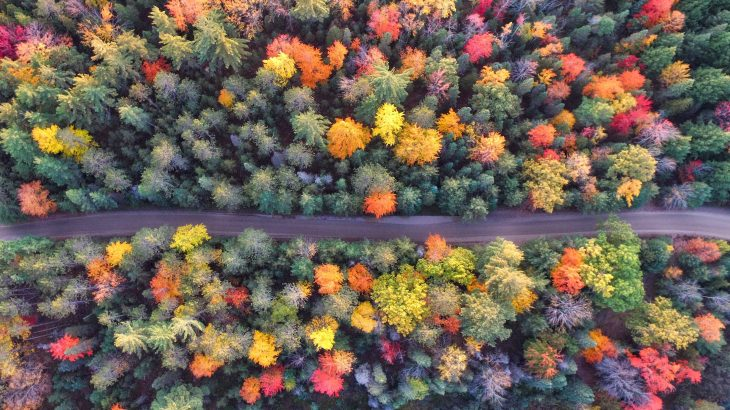 bird's eye view of green, orange, yellow, red leaved trees in fall divided by a road
