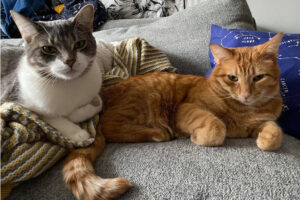 Two cats listening to their Spotify playlist.